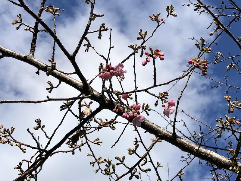 春…はじまり